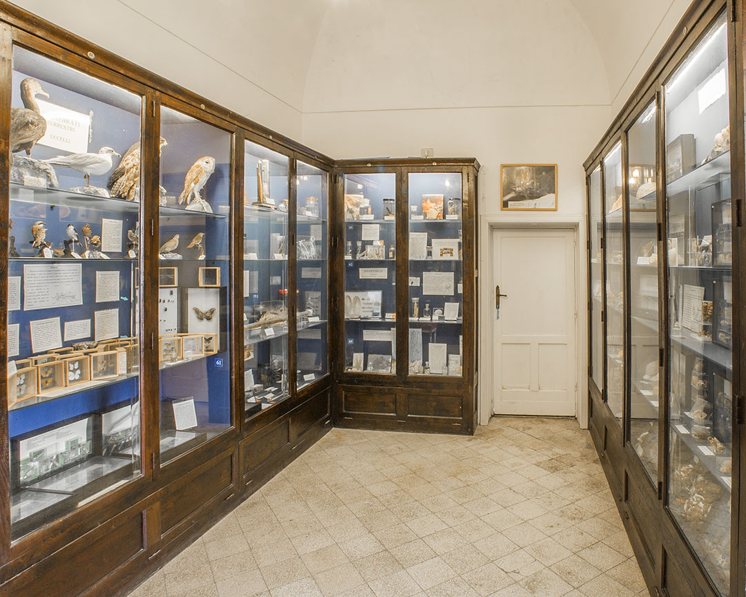 The Biology Hall in the Ignazio Cerio Museum