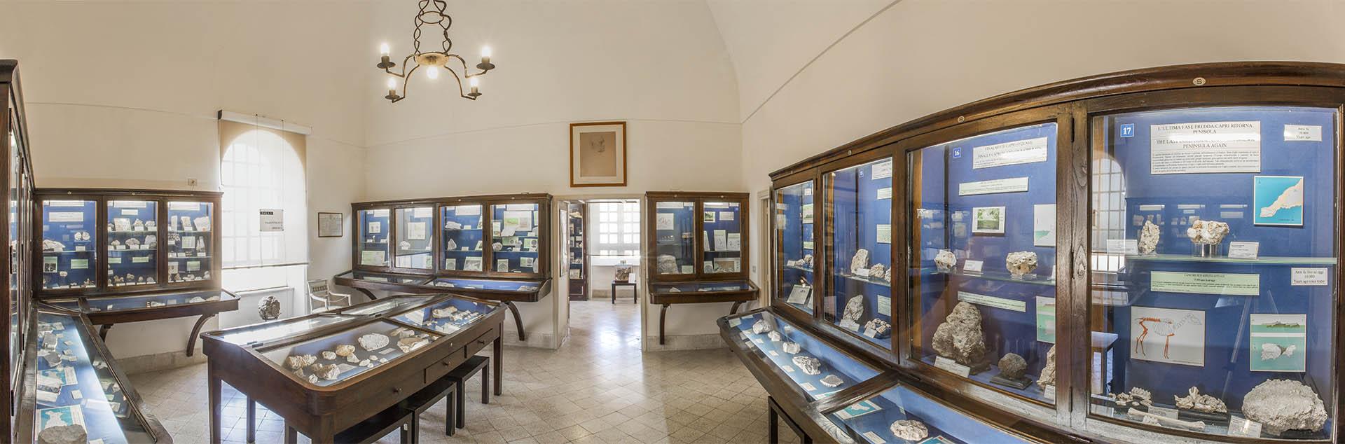 Sala di Paleontologia e Geologia del Museo Ignazio Cerio