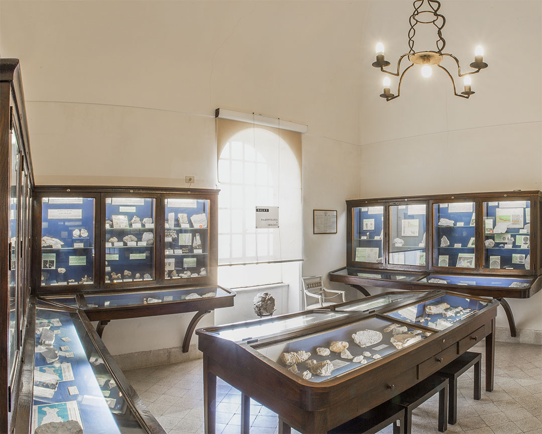 The Ignazio Cerio Museum Palaeontology and Geology Hall