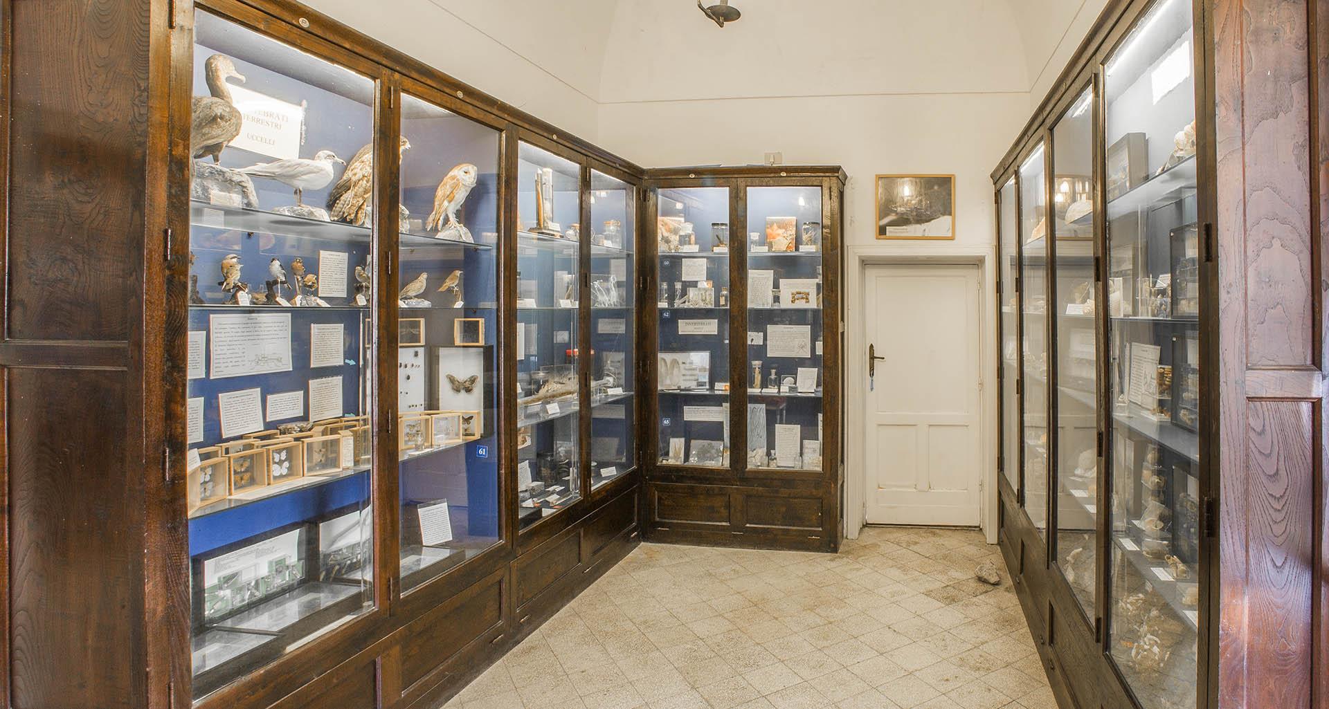Sala di Biologia del Museo Ignazio Cerio